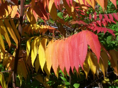 Leaves in NH Oct 08